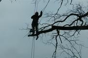 Спилить дерево,  удалить дерево,  срубить дерево,  обрезать сад,  арборист